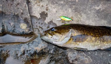 Best Lures for Smallmouth Bass