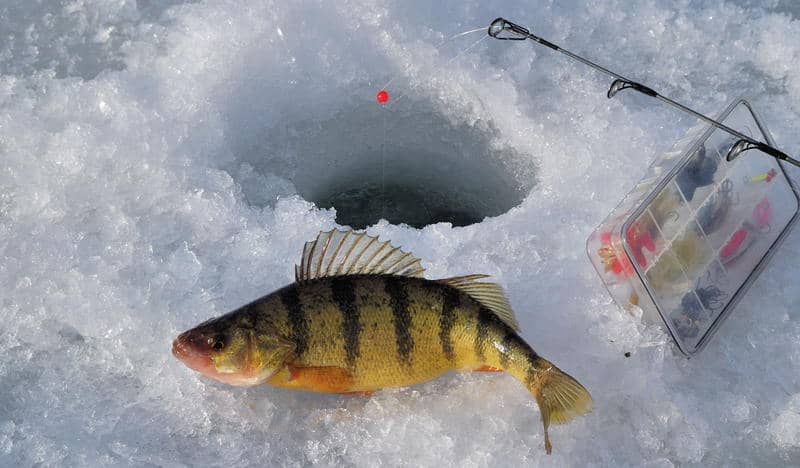 best ice fishing rod