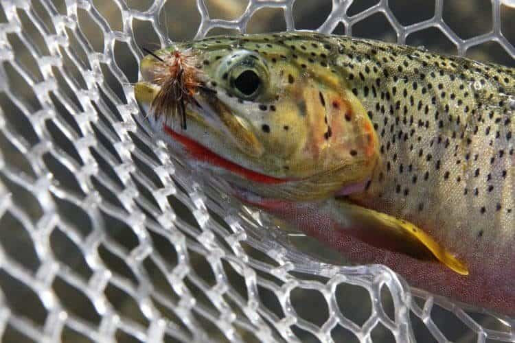 The Best Fly Fishing Flies Review