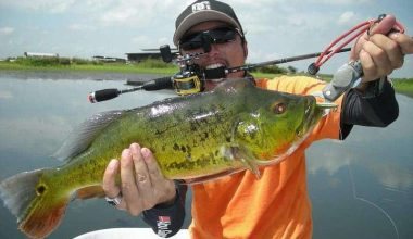 My Bass Fishing Setup Guide For The Year - Best Bass Lures 1
