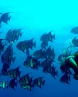 Diving in Cuba - word image 19