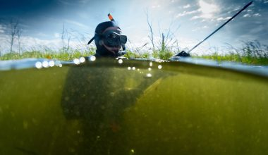 The Best Spearfishing Mask