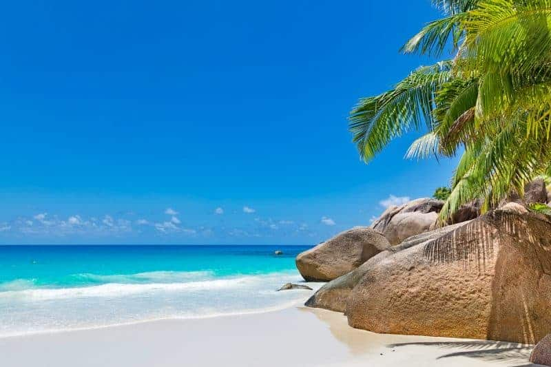 How To Plan For Your First Dive Vacation - Tropical Beach Palm Tree