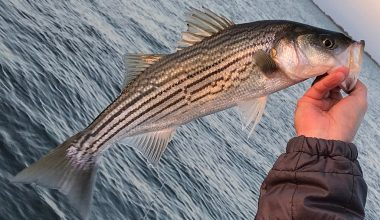best striper reel